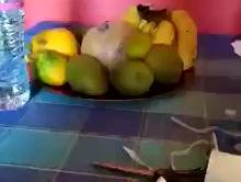 Covid 19 : Une femme guadeloupéenne réalise un tuto pour fabriquer des masques  partagez