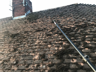 MOSS REMOVAL EASTBOURNE