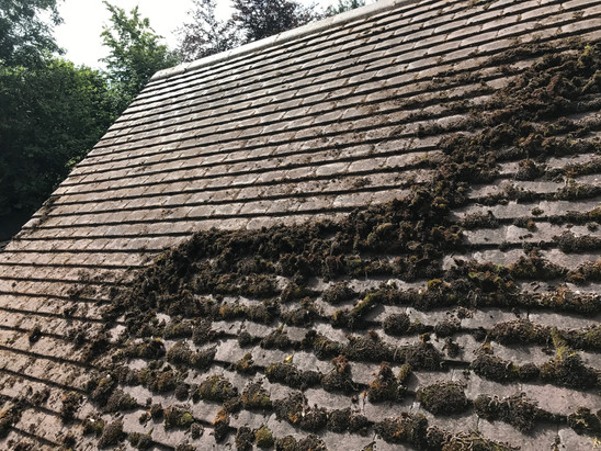 MOSS REMOVAL ROOF CLEANING IN HASTINGS