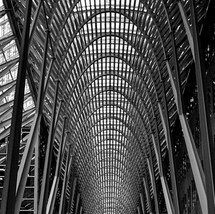 Vertebral Columns