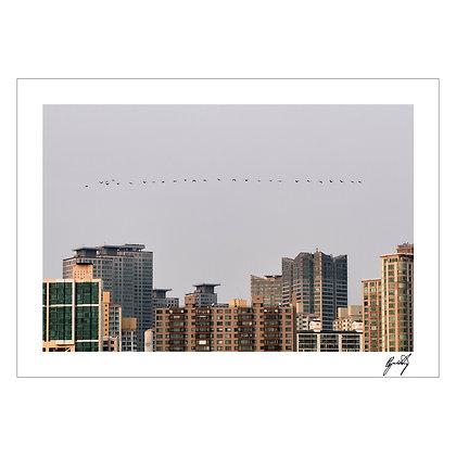 BUILDINGS & BIRDS | Kristine Barreiro