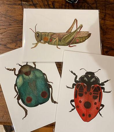5 x 7 Art Prints