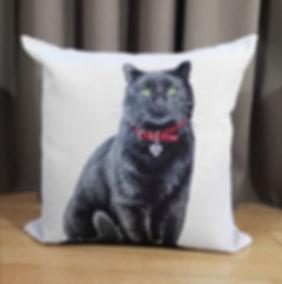 CUSHION CAT COL.1.jpg