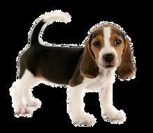 dog%204_edited.png