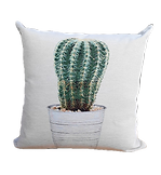 CUSHION%20CACTUS%20COL_edited.png
