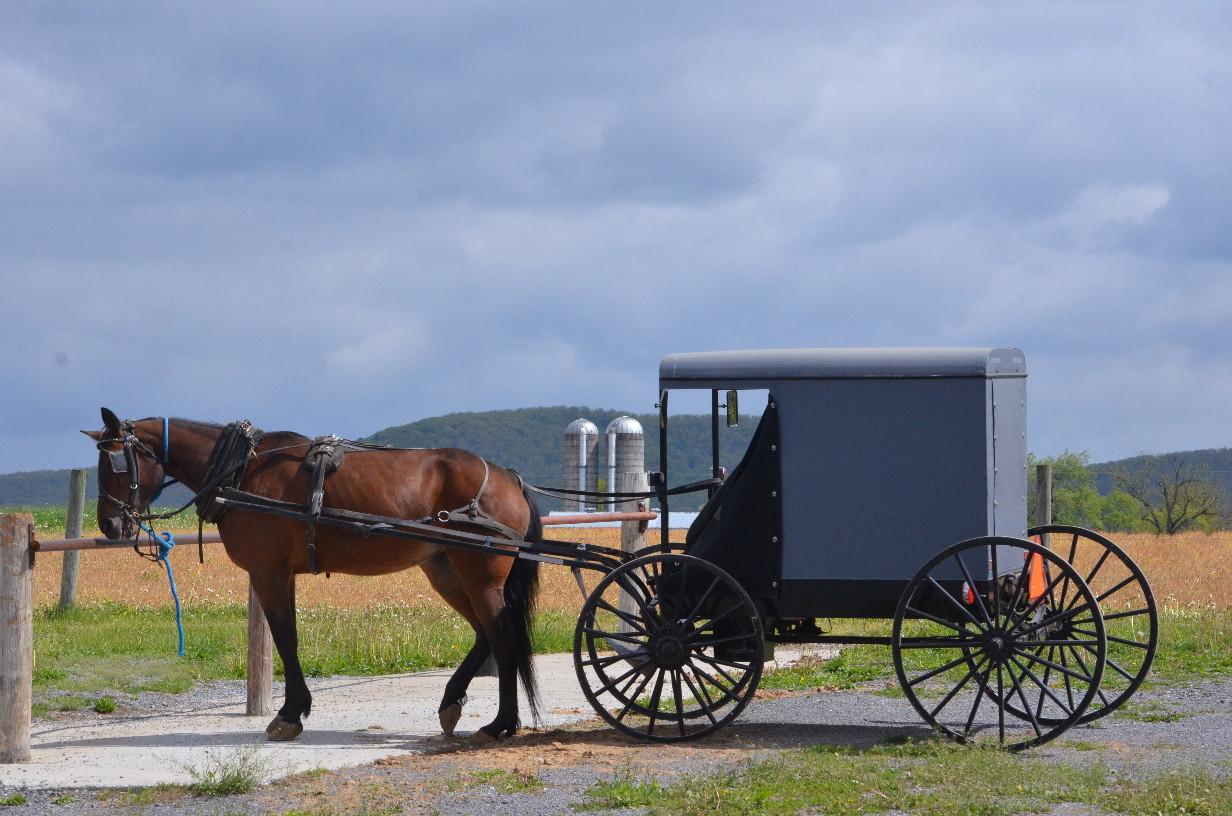 Horse Buggy.jpg