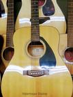 Guitars Shows.jpg