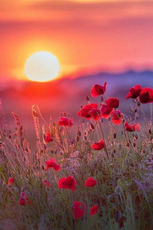 Initiation à l'énergie des fleurs et aux Fleurs éthériques