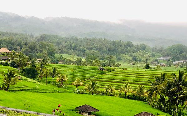 Jatiluwih Rice Terraces.jpg