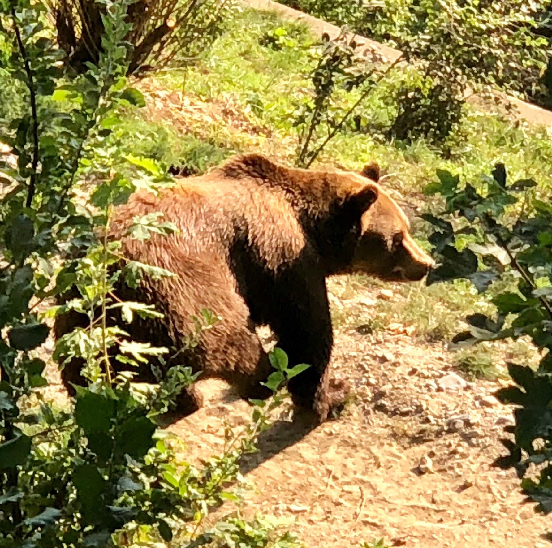 Bern Bear Park