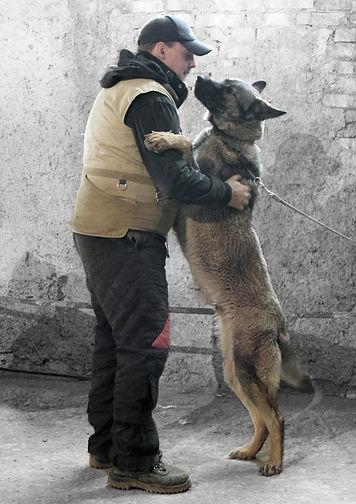 дрессировка собак в Алматы