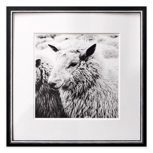 Wiltshire Sheep, Framed Limited Edition Giclée Print
