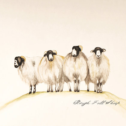ROUGH FELL SHEEP CARD (pack of 6)