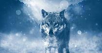 mystic wolf1.jpg