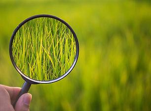 Environmental Inspections.jpg