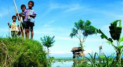 Balinese Ricefields