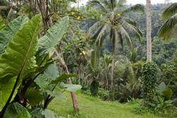 Rainforest around Ubud