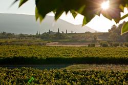 Domaine des Andeols, Provence