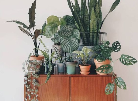 Finding Your Plant Style