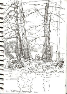Losing Trees Sketch, Canada
