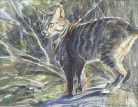 Spike, Watercolor