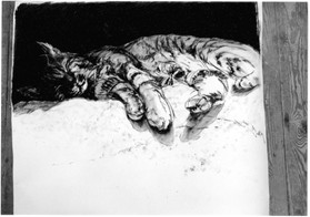 Wild Cat Charcoal