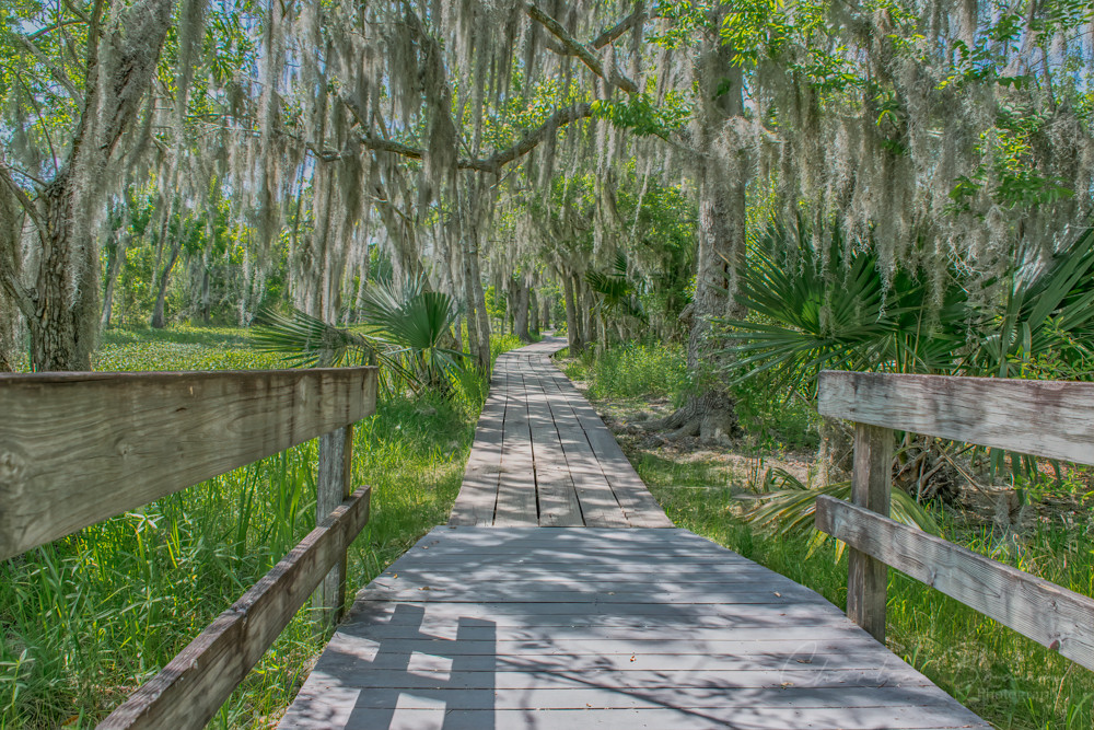 Walking trail at Barataria Preserve