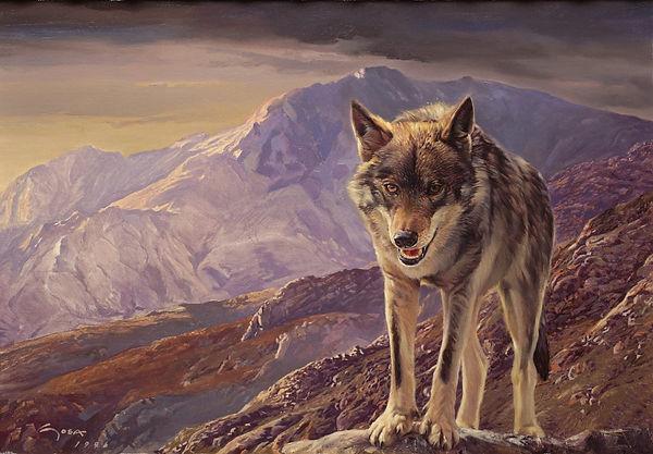 wolf4.jpg