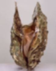 inside-womens-shells-05_edited.jpg