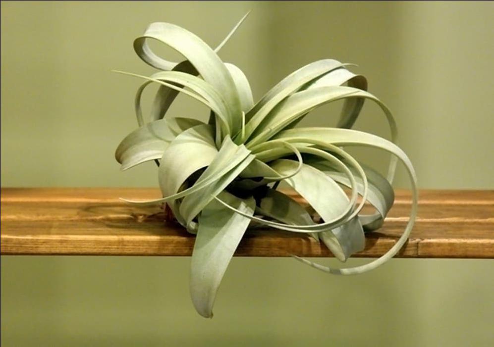 Evimiz için en güzel süs: Bitkiler