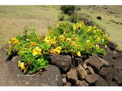 Растительность на острове скудная