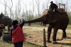 Слоны в Читване
