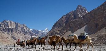 К2 караван верблюдов в долине Шагсгам