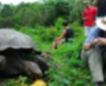 гигантские череахи в Эквадоре