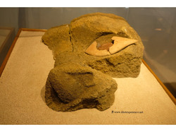 Оригинальный глаз моаи