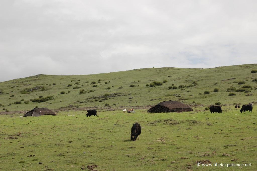 Юрты тибетских кочевников и яки