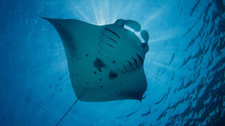 Central Atoy_Beach_Diving_6.1070.web