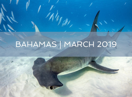 February Newsletter : Come Dive with Us