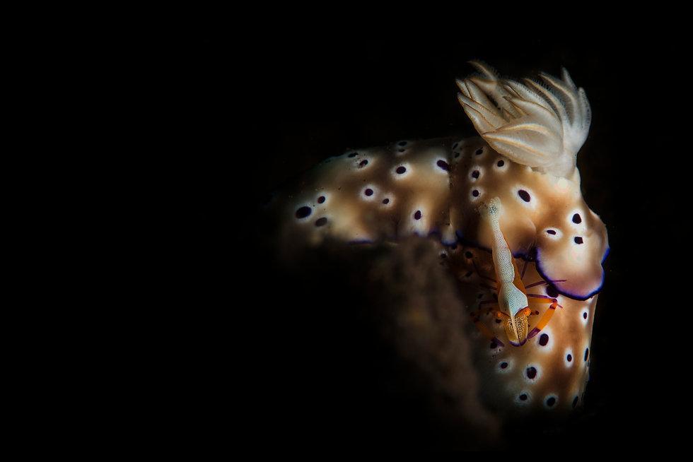 Nudi and shrimp 50p 72px.jpeg
