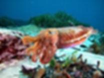 flora fauna salgar diving jpg (6).jpg