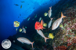 Socorro Islands