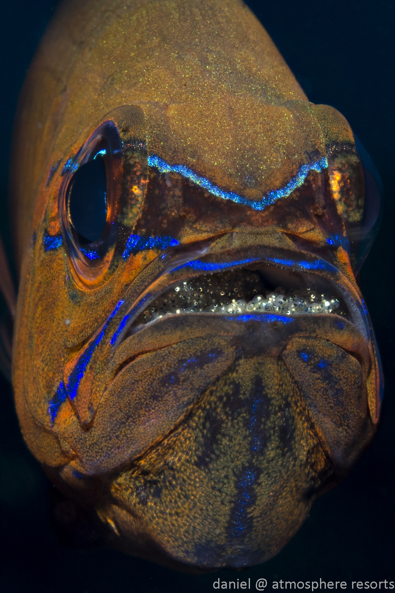 Dumaguete : cardinalfish with eggs