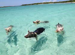 Exumas Bahamas