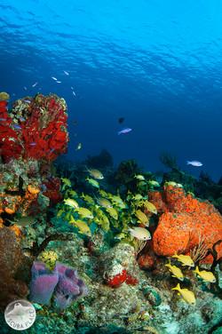Yucatan Peninsula Mexico