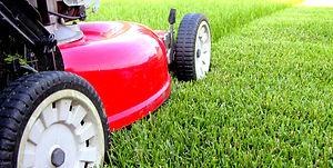 lawn 2021.jpg