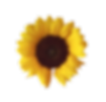 flower_外国人講師のネイティブ.png