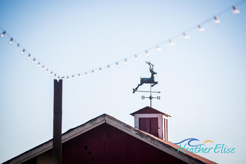 Bradford Ranch Wedding (529 of 819)-X2.j