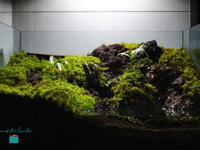 Paludario Biotopo
