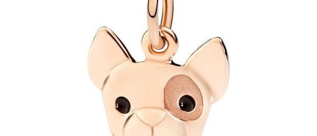 Bulldog francese - ti porgo la zampa