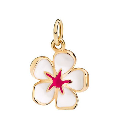 Fiore di ciliegio bianco - Sei la più bella